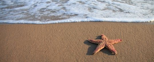 The Starfish Story Curmudgeon